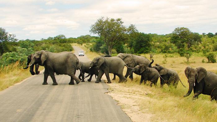 Övergångsställe i Krugerparken.