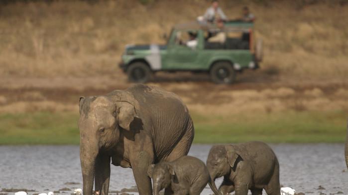 Elefanter i Yala nationalpark