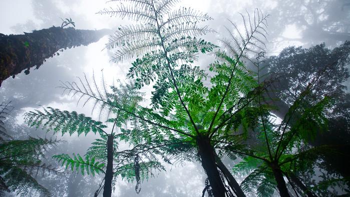 Skogen kring berget Kinabalu