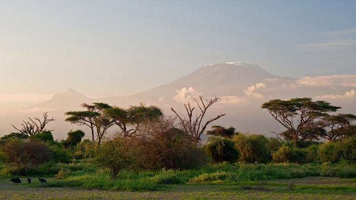 Vid klart väder i Amboseli visar sig Afrikas högsta berg - Kilimanjaro