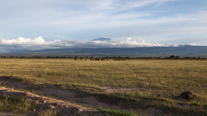 Amboseli med Kilimanjaro i bakgrunden