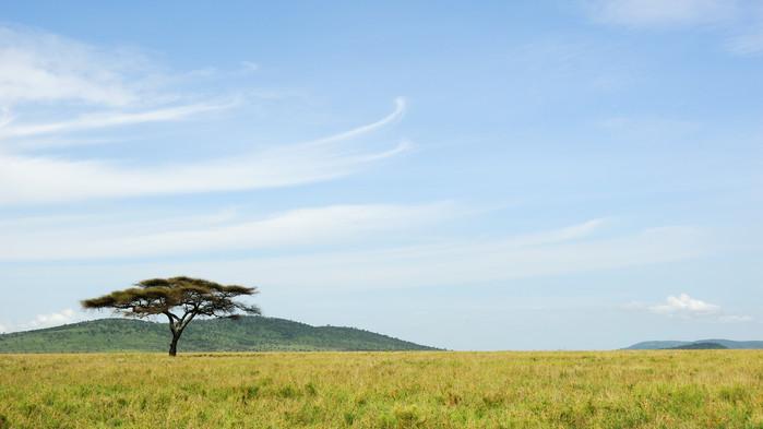 Serengetis vidsträckta savann.