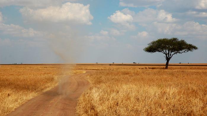 Savann med dammvirvel, Serengeti.