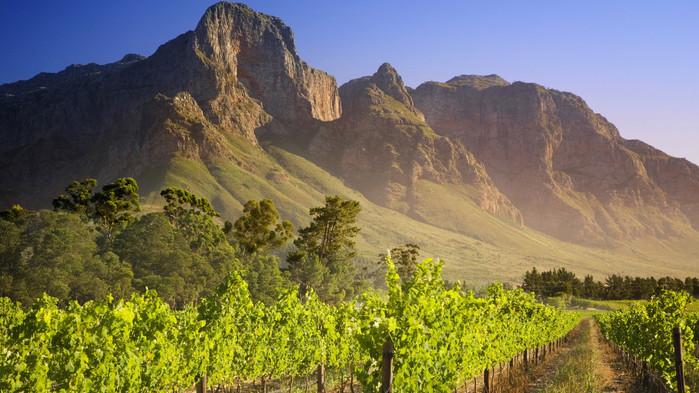 Vinrankor i vackra omgivningar.