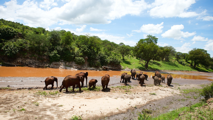 Elefantflock i vackra Tarangire Nationalpark.