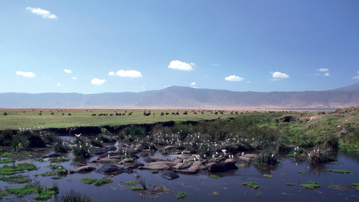 Den lilla sjön i Ngorongorokraterns botten.